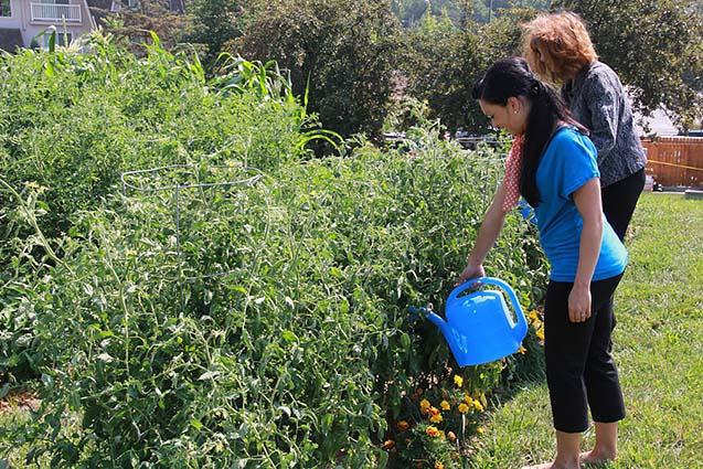 NMC-Community-Garden-002.jpg