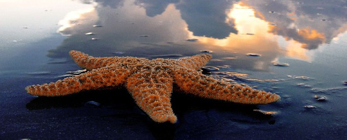Image of a starfish on the beach.