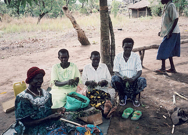 Anna's mother (far left)  and aunties in South Sudan collect casaba leaves.